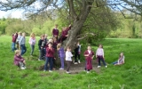 A large tree is for learning and fun.